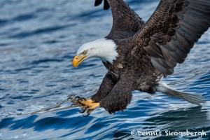 5196 Bald Eagle, Talons