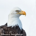 5198 Bald Eagle, Homer, Alaska