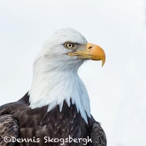 5198 Bald Eagle, Homer, Alaska
