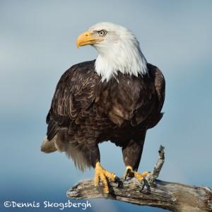 5199 Bald Eagle, Homer, Alaska
