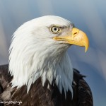 5200 Bald Eagle, Homer, Alaska