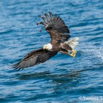 5203 Bald Eagle, Homer, Alaska