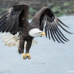 5204 Bald Eagle, Homer, Alaska