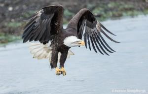 5204 Bald Eagle, Homer, Alaska