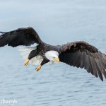 5206 Bald Eagle, Homer, Alaska