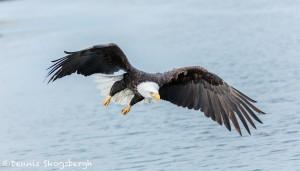 5206 Bald Eagle, Homer, Alaska