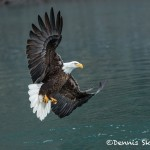 5207 Bald Eagle, Homer, Alaska