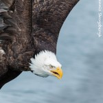 5217 Bald Eagle, Homer, Alaska