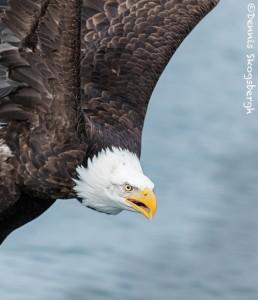 5217 Bald Eagle, Homer, Alaska