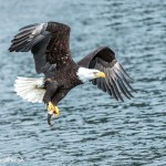 5221 Bald Eagle, Homer, Alaska