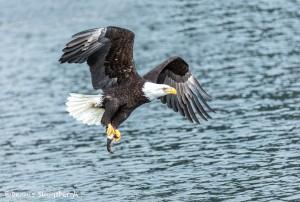5221 Bald Eagle, Homer, Alaska
