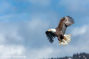 5226 Bald Eagle, Homer, Alaska