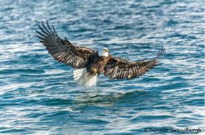 5229 Bald Eagle, Homer, Alaska