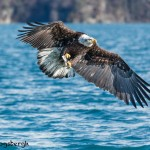 5230 Bald Eagle Homer, Alaska