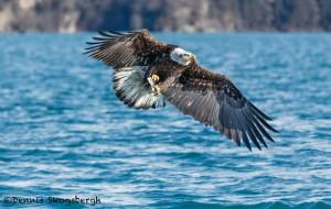 5230 Bald Eagle Homer, Alaska