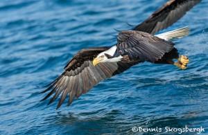 5232 Bald Eagle, Homer, Alaska