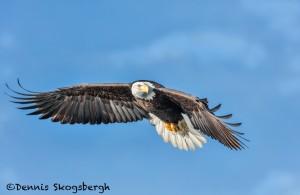 5233 Bald Eagle, Homer, Alaska