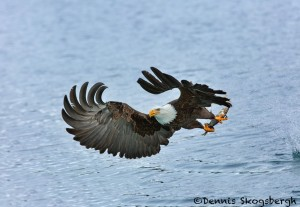 5235 Bald Eagle, Homer, Alaska