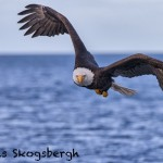 5237 Bald Eagle, Homer, Alaska
