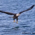 5239 Bald Eagle, Homer, Alaska
