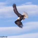 5241 Bald Eagle, Homer, Alaska