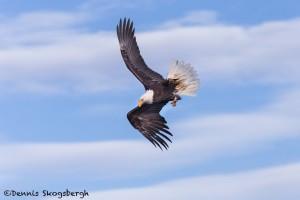 5241 Bald Eagle, Homer, Alaska