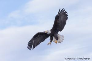 5243 Bald Eagle, Homer, Alaska