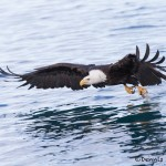 5244 Bald Eagle, Homer, Alaska