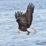 5246 Bald Eagle, Homer, Alaska