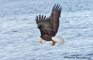 5246 Bald Eagle, Homer, Alaska
