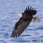 5245 Bald Eagle, Homer, Alaska
