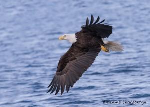 5245 Bald Eagle, Homer, Alaska