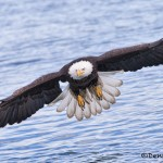 5247 Bald Eagle, Homer, Alaska