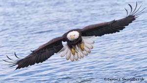 5247 Bald Eagle, Homer, Alaska
