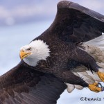5248 Bald Eagle, Homer, Alaska