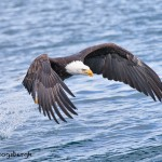 5249 Bald Eagle, Homer, Alaska