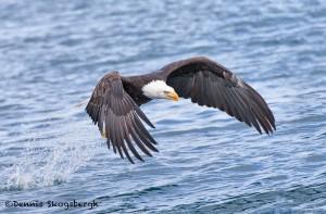 5249 Bald Eagle, Homer, Alaska