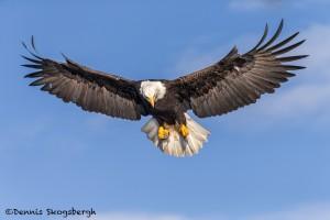 5252 Bald Eagle, Homer, Alaska