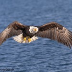 5253 Bald Eagle, Homer, Alaska