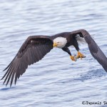 5255 Bald Eagle, Homer, Alaska
