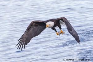 5255 Bald Eagle, Homer, Alaska