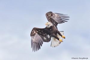 5256 Bald Eagle, Homer, Alaska