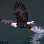 5258 Bald Eagle, Homer, Alaska