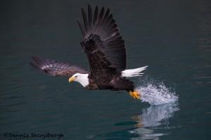 5258 Bald Eagle, Homer, Alaska