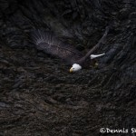 5263 Bald Eagle, Homer, Alaska