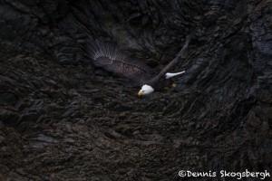 5263 Bald Eagle, Homer, Alaska