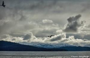 5271 Kachemak Bay, Homer, Alaska