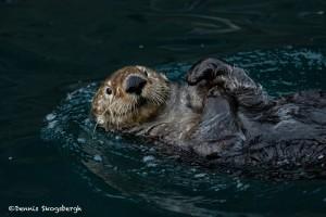 5274 Sea Otter, Alaska