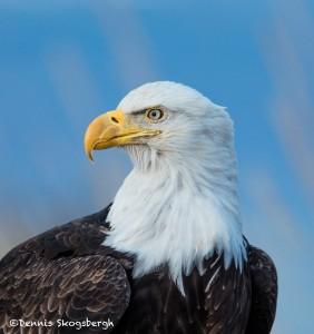 5282 Bald Eagle, Homer, Alaska