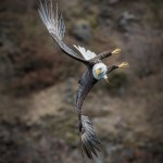 5283 Bald Eagle, Homer, Alaska